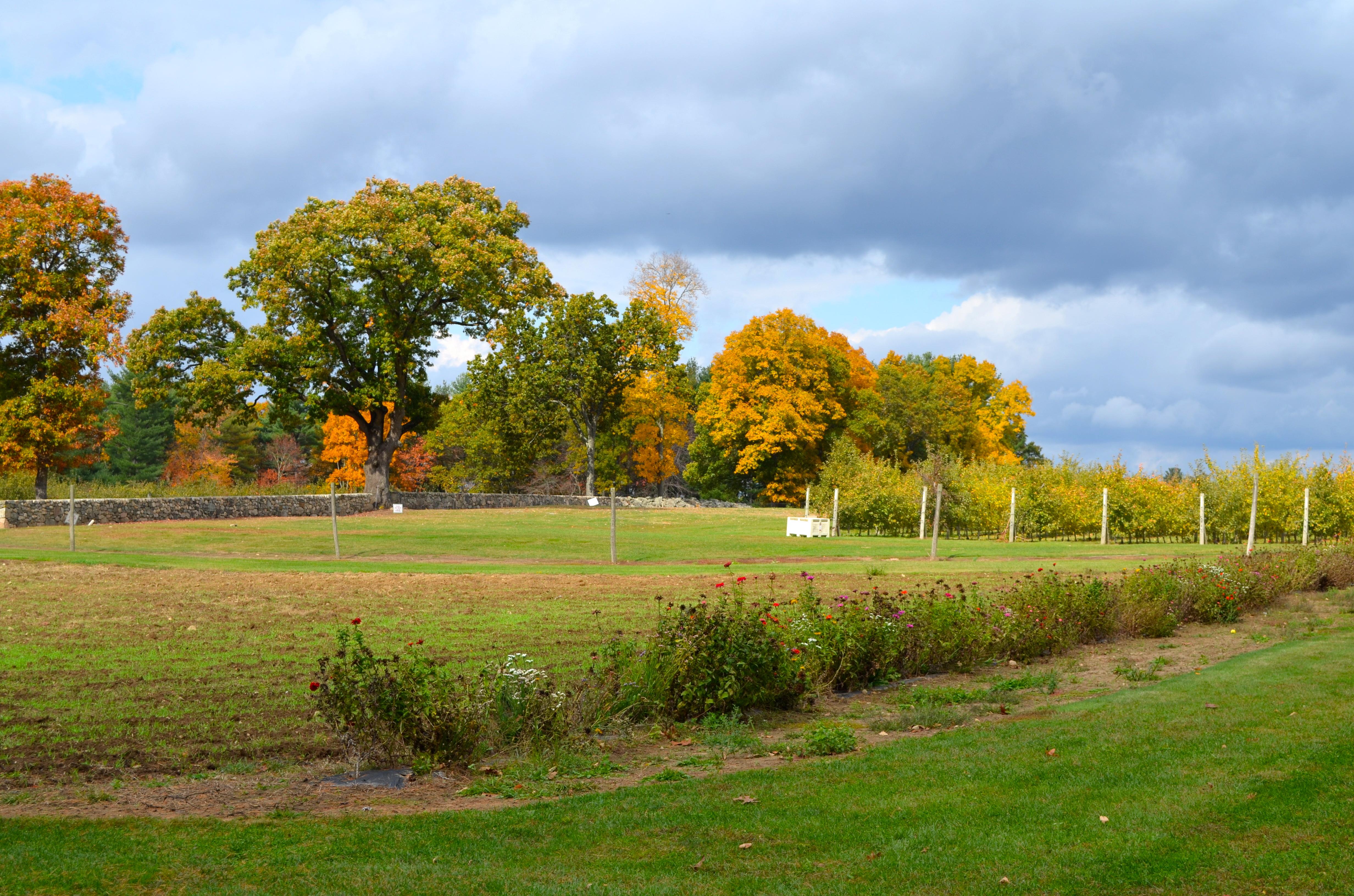 Dsc Garden Farms Bellingham Ma
